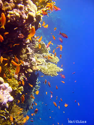 scuba diving in the philippines: pescador island